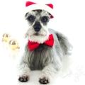 Merry Christmas! Merlyn Photo~shoot Christmas 2012