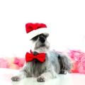 Merry Christmas! Merlyn Photo~shoot Christmas 2012, Pet Photography